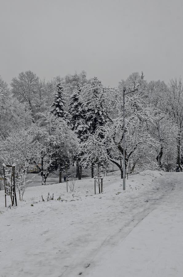 Η μεγαλοπρεπής άποψη των χιονωδών δέντρων και το έλκηθρο γλιστρούν μέσα το χειμερινό πάρκο, Bankya στοκ φωτογραφίες με δικαίωμα ελεύθερης χρήσης
