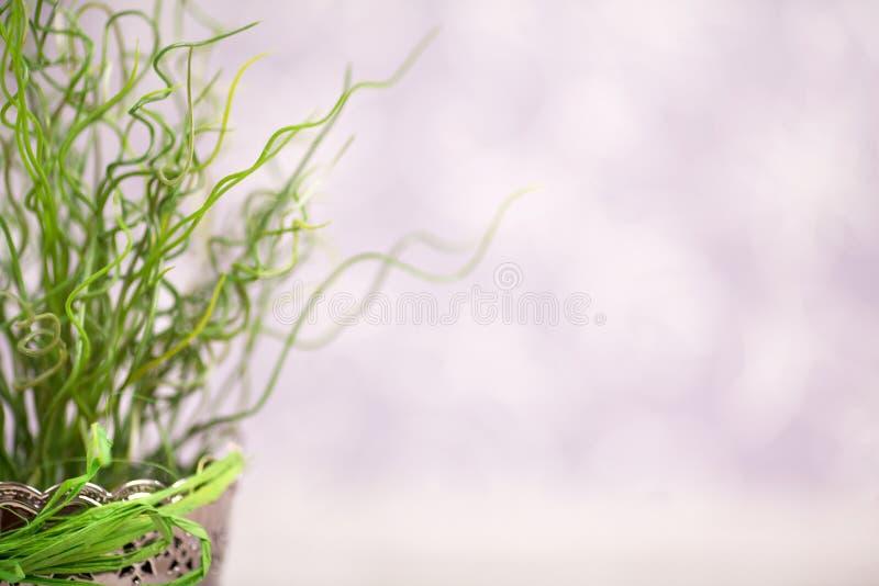 Η μεμονωμένα διαμορφωμένη χλόη στοκ εικόνα