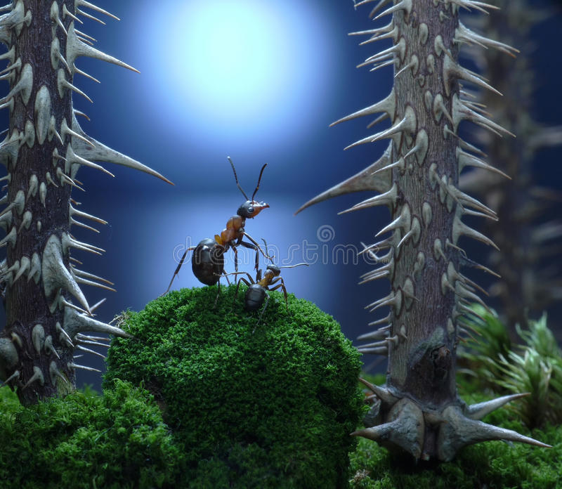 Η μητέρα, δεν με αφήνει εδώ! ιστορίες μυρμηγκιών, θρίλλερ στοκ εικόνες
