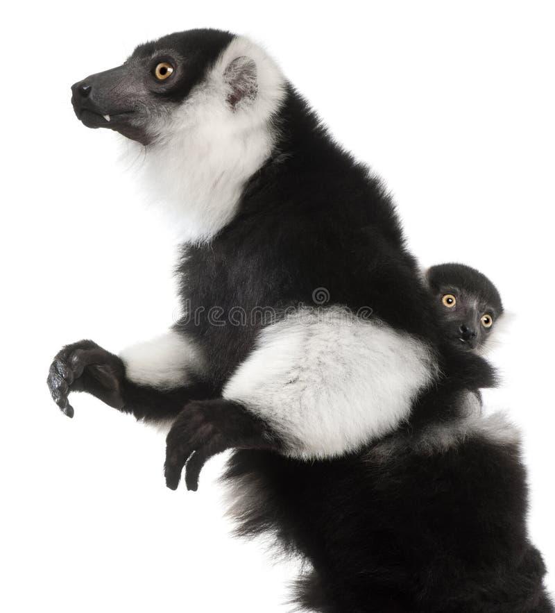 Η μητέρα και το μωρό γραπτές ο κερκοπίθηκος, subcincta variegata Varecia, 7 χρονών και 2 μηνών στοκ εικόνα με δικαίωμα ελεύθερης χρήσης