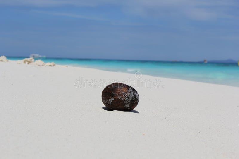 Η μικρή καρύδα με την παραλία, Ταϊλάνδη στοκ φωτογραφία με δικαίωμα ελεύθερης χρήσης
