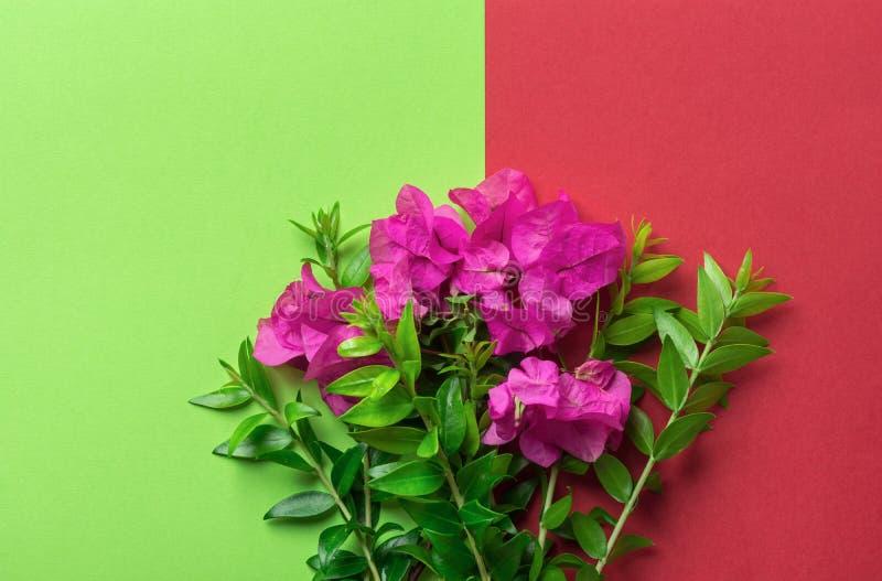 Η μικρή κομψή ανθοδέσμη πράσινων κλαδίσκων λουλουδιών κήπων των φούξια ρόδινων στο δίδυμο τονίζει chartreuse το κόκκινο υπόβαθρο  στοκ εικόνες