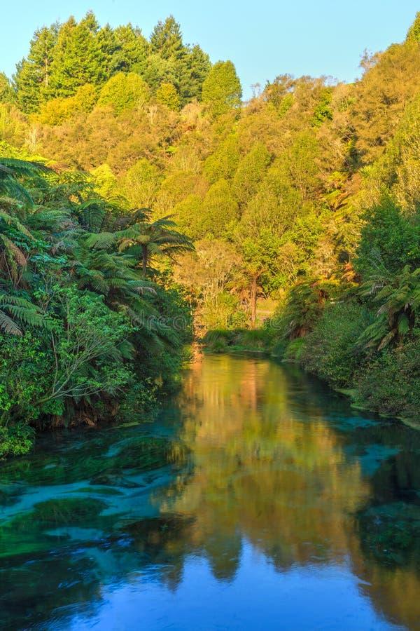 Η μπλε άνοιξη, Te Waihou, Νέα Ζηλανδία Δέντρα που απεικονίζονται στο ηλιοβασίλεμα στοκ εικόνες