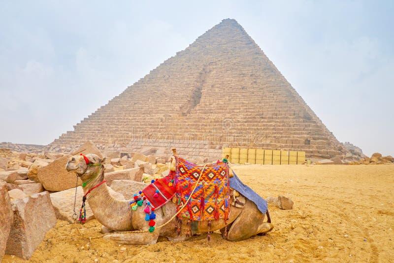 Η μόνη καμήλα στη νεκρόπολη Giza, Αίγυπτος στοκ φωτογραφίες με δικαίωμα ελεύθερης χρήσης