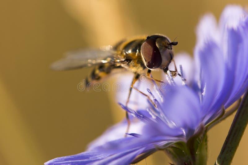 η μύγα αιωρείται στοκ φωτογραφία