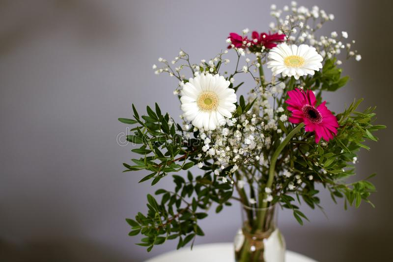 Η νέα ανθοδέσμη Daisy αρχών ανθίζει την άσπρη κόκκινη πιστή αγάπη πετάλων στοκ εικόνες με δικαίωμα ελεύθερης χρήσης