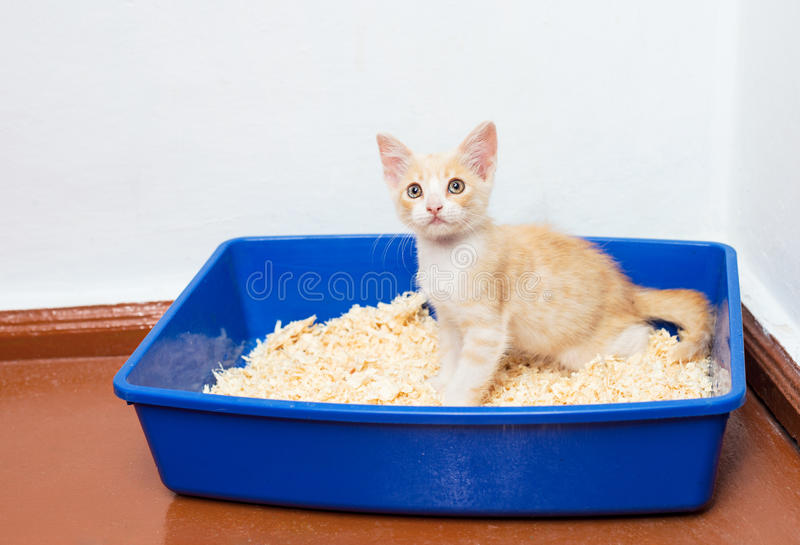 Η νέα γάτα χρησιμοποιεί την τουαλέτα στοκ εικόνες