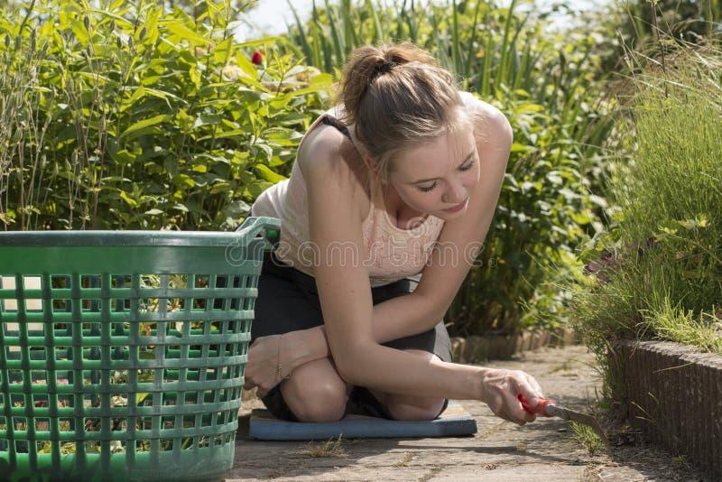 Η νέα γυναίκα αφαιρεί τα ζιζάνια από τον κήπο της στοκ εικόνα