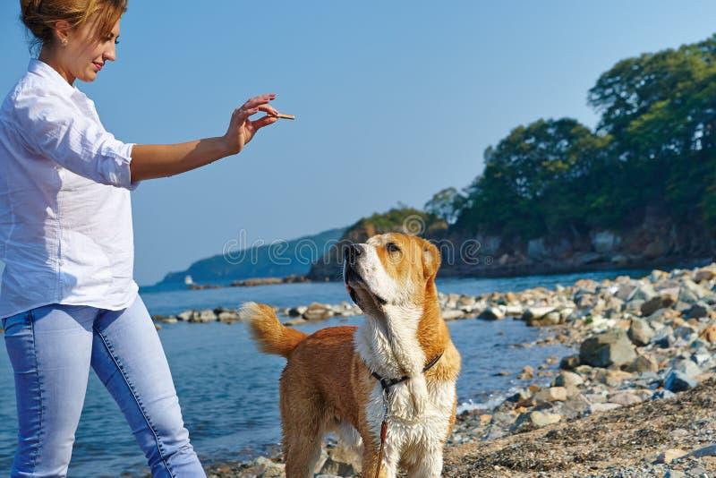 Η νέα γυναίκα εκπαιδεύει το σκυλί της στην παραλία στοκ φωτογραφίες