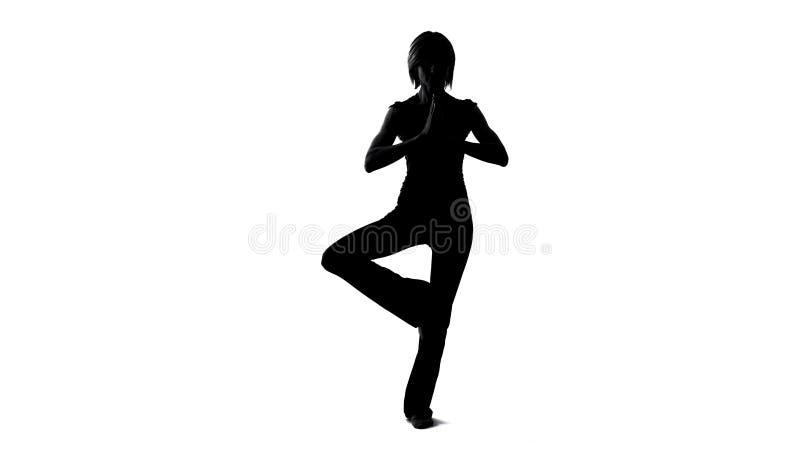 Η νέα θηλυκή γιόγκα άσκησης σκιών, δέντρο θέτει την άσκηση, την ψυχή και την αρμονία σωμάτων ελεύθερη απεικόνιση δικαιώματος