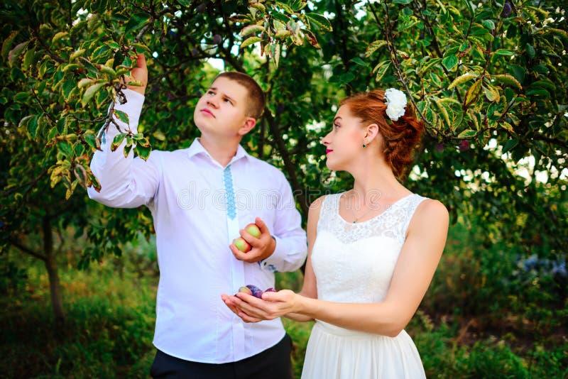 Η νύφη και ο νεόνυμφος φιλούν στον οπωρώνα μήλων, που στέκεται το u στοκ εικόνα