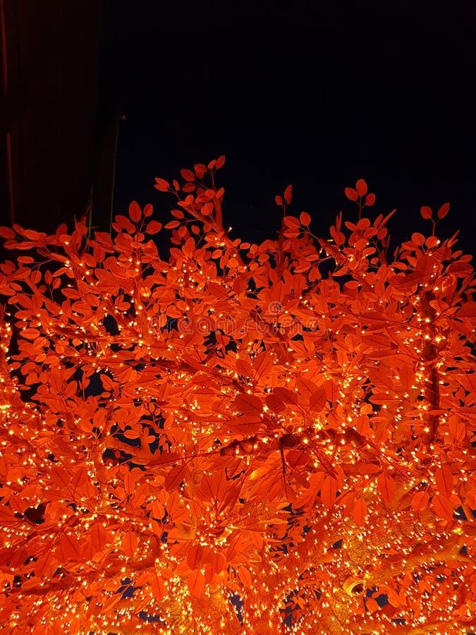 Η νύχτα ανάβει την κορυφή δέντρων στοκ φωτογραφίες