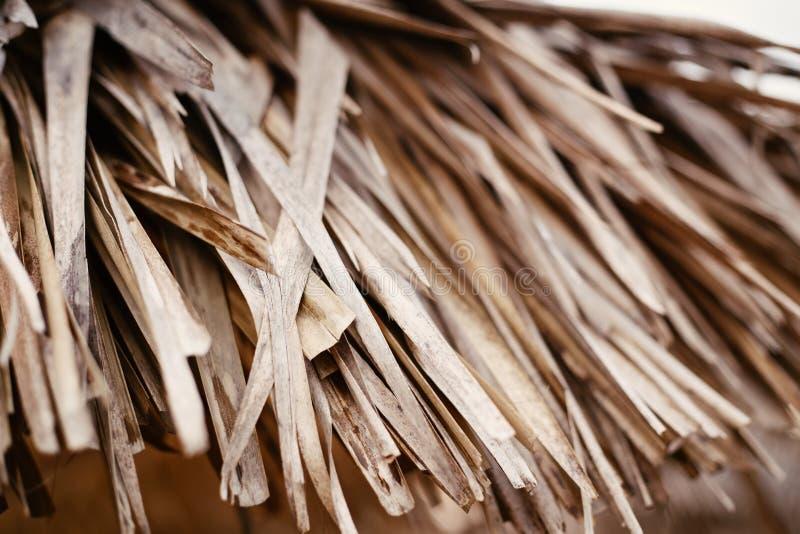 Η ξηρά κίτρινη μπεζ καφετιά πτώση φθινοπώρου thatch μετατρέπει την ταπετσαρία υποβάθρου σύστασης αχύρου, μέρος της στέγης thatch  στοκ φωτογραφία με δικαίωμα ελεύθερης χρήσης