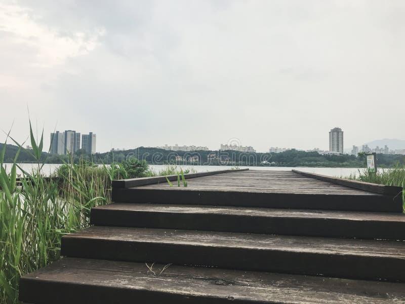 Η ξύλινη αποβάθρα που εισβάλλεται με τους καλάμους στη λίμνη της πόλης Sokcho, Νότια Κορέα στοκ εικόνα