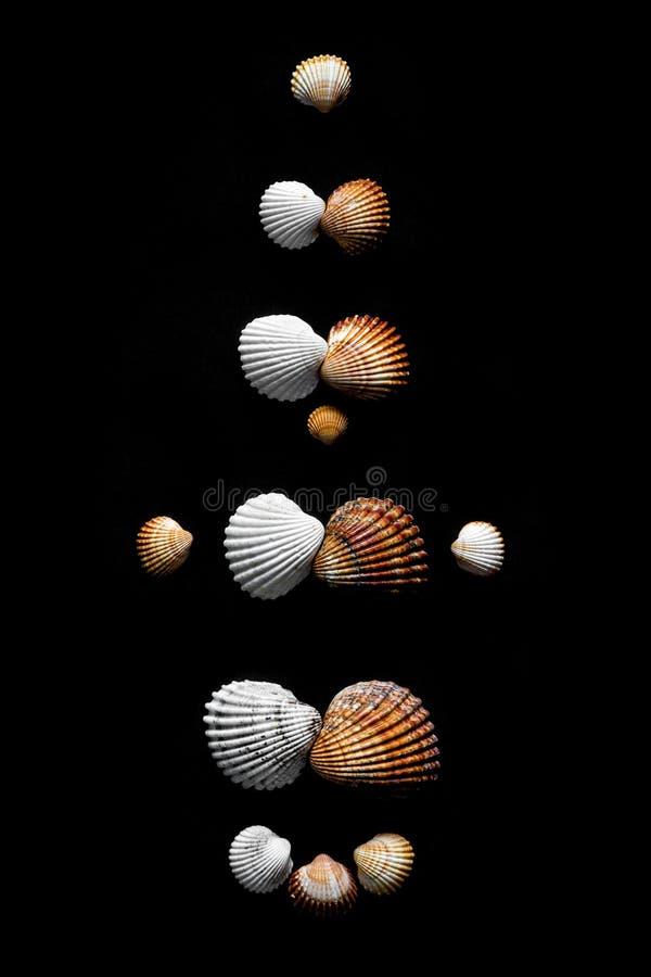 Η οικογενειακή εξέλιξη φαίνεται από τα κελύφη της θάλασσας στο μαύρο φόντο στοκ εικόνες