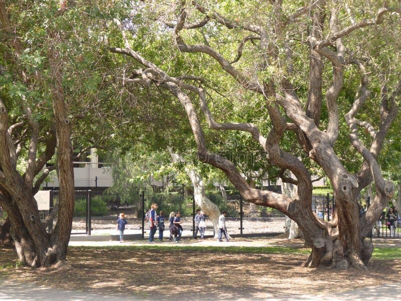 Η ομάδα σχολικού παιδιών και ενηλίκου που εξερευνούν τα κοιλώματα πίσσας La Brea & μουσείου, Λος Άντζελες, Καλιφόρνια, circa μπορ στοκ φωτογραφία