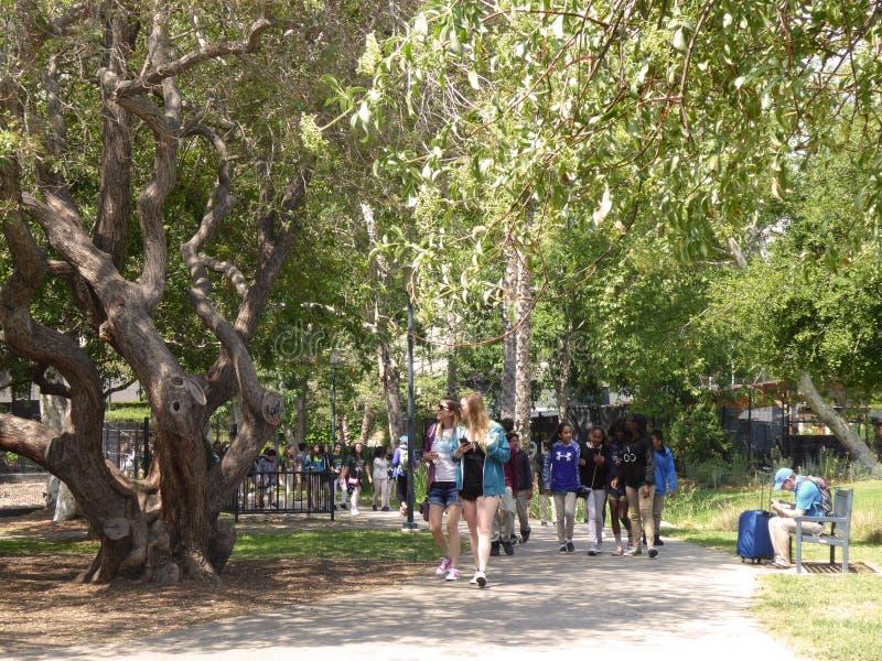 Η ομάδα σχολικών παιδιών που εξερευνούν τα κοιλώματα πίσσας La Brea & το μουσείο, Λος Άντζελες, Καλιφόρνια, circa μπορούν το 2017 στοκ φωτογραφίες