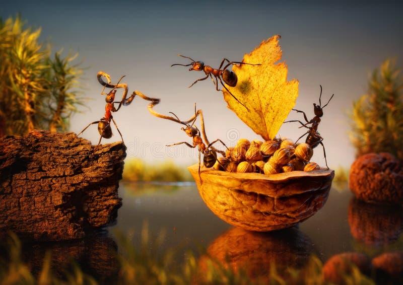 Η ομάδα των μυρμηγκιών δένει το φλοιό με τα καρύδια, ομαδική εργασία στοκ φωτογραφίες με δικαίωμα ελεύθερης χρήσης