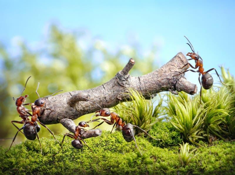 Η ομάδα των μυρμηγκιών φέρνει το κούτσουρο, ομαδική εργασία στοκ φωτογραφία