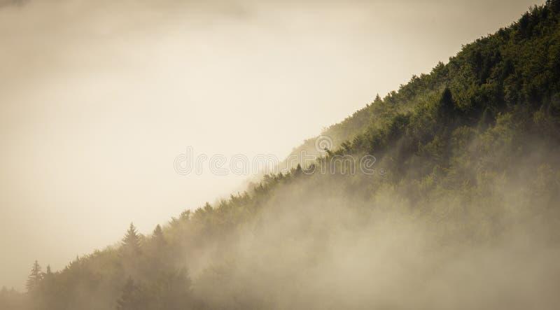 Η ομίχλη καλύπτει το δάσος στοκ φωτογραφίες