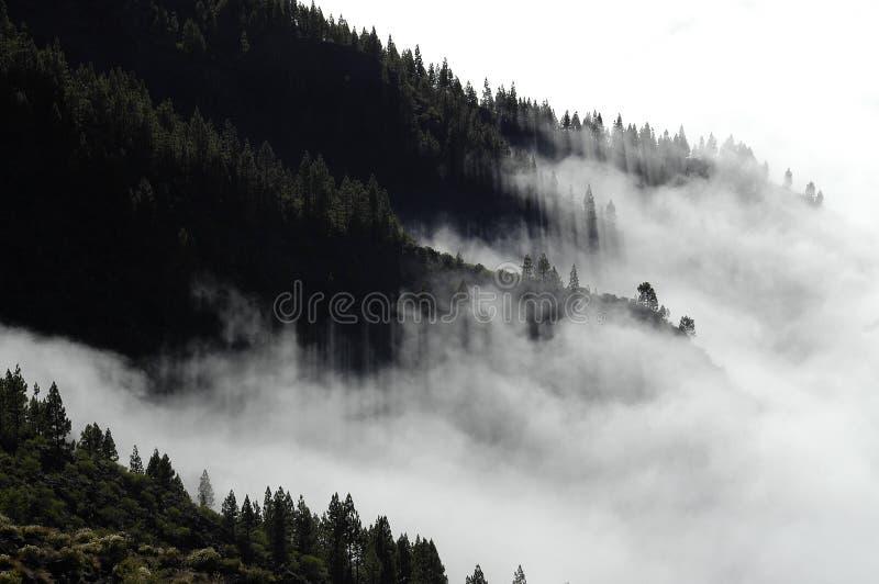 Η ομίχλη στοκ φωτογραφία