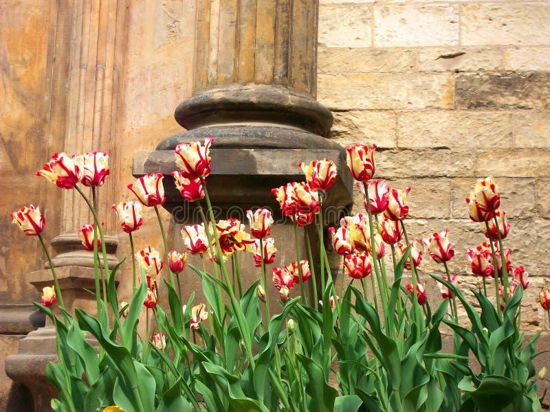 Η ομορφιά λουλουδιών στοκ εικόνες