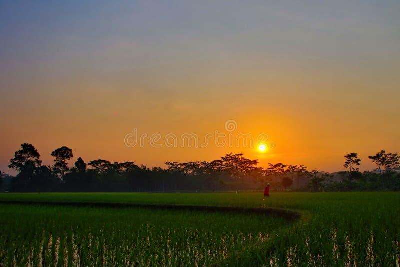 Η ομορφιά της ανατολής στους τομείς ρυζιού στοκ εικόνες με δικαίωμα ελεύθερης χρήσης