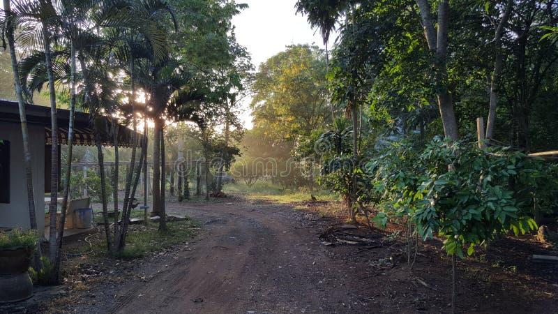 Η ομορφιά της ποικιλίας των πράσινων δέντρων στοκ εικόνα με δικαίωμα ελεύθερης χρήσης