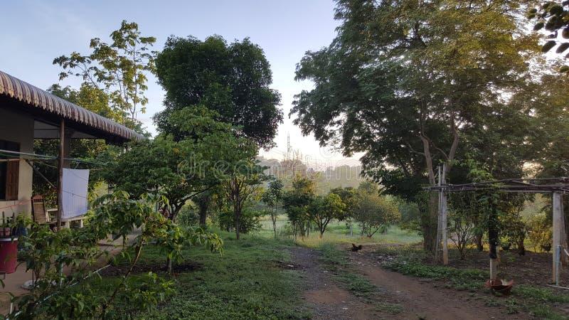 Η ομορφιά της ποικιλίας των πράσινων δέντρων στοκ φωτογραφία με δικαίωμα ελεύθερης χρήσης