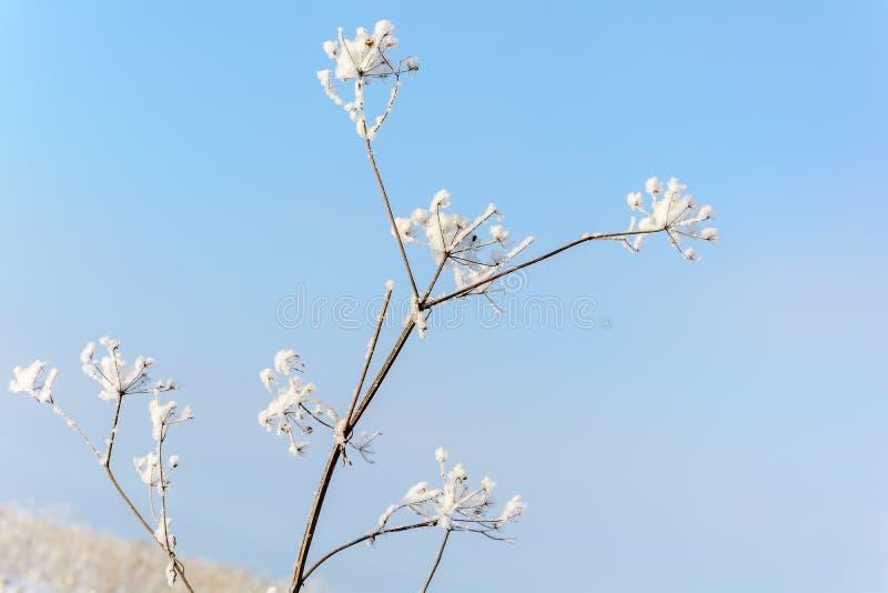 Η ομορφιά της φύσης το χειμώνα στοκ εικόνες