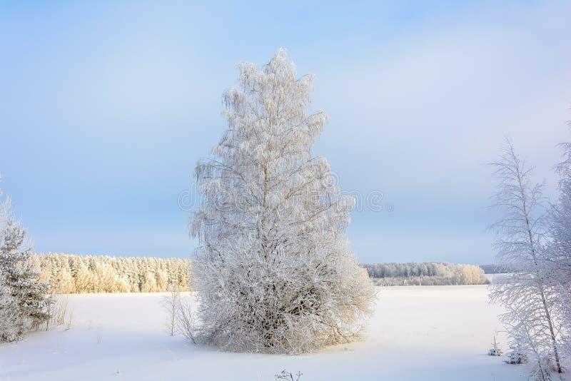 Η ομορφιά της φύσης το χειμώνα στοκ εικόνες με δικαίωμα ελεύθερης χρήσης