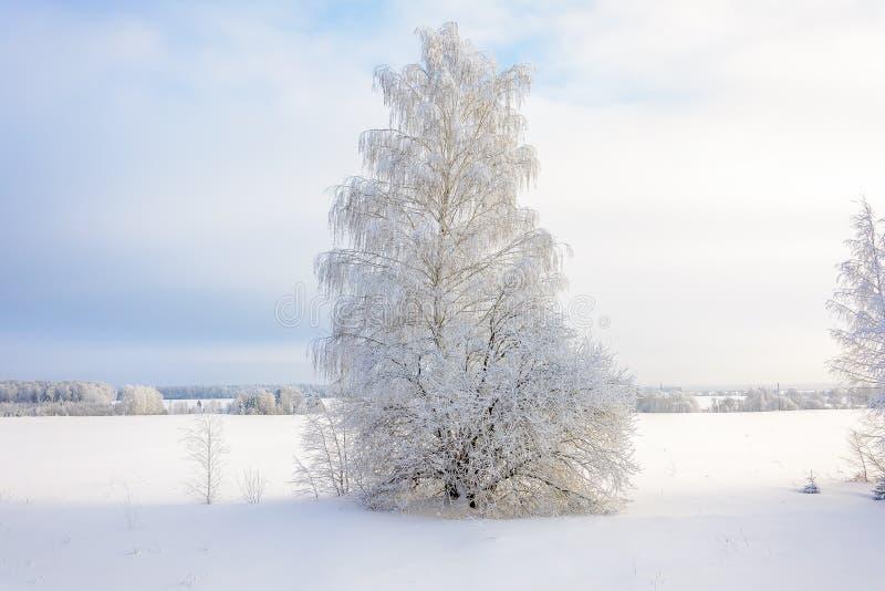 Η ομορφιά της φύσης το χειμώνα στοκ φωτογραφίες με δικαίωμα ελεύθερης χρήσης