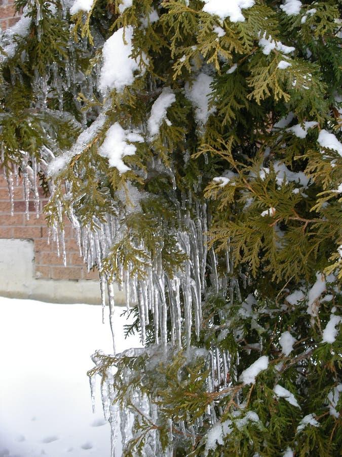 Η ομορφιά του πάγου μετά από τη βροχή παγώματος στοκ εικόνα με δικαίωμα ελεύθερης χρήσης