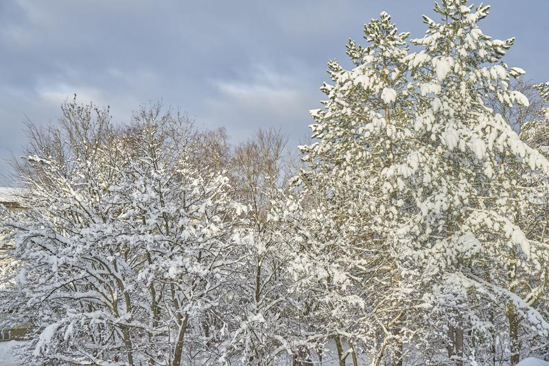 Η ομορφιά του χιονιού στοκ εικόνες