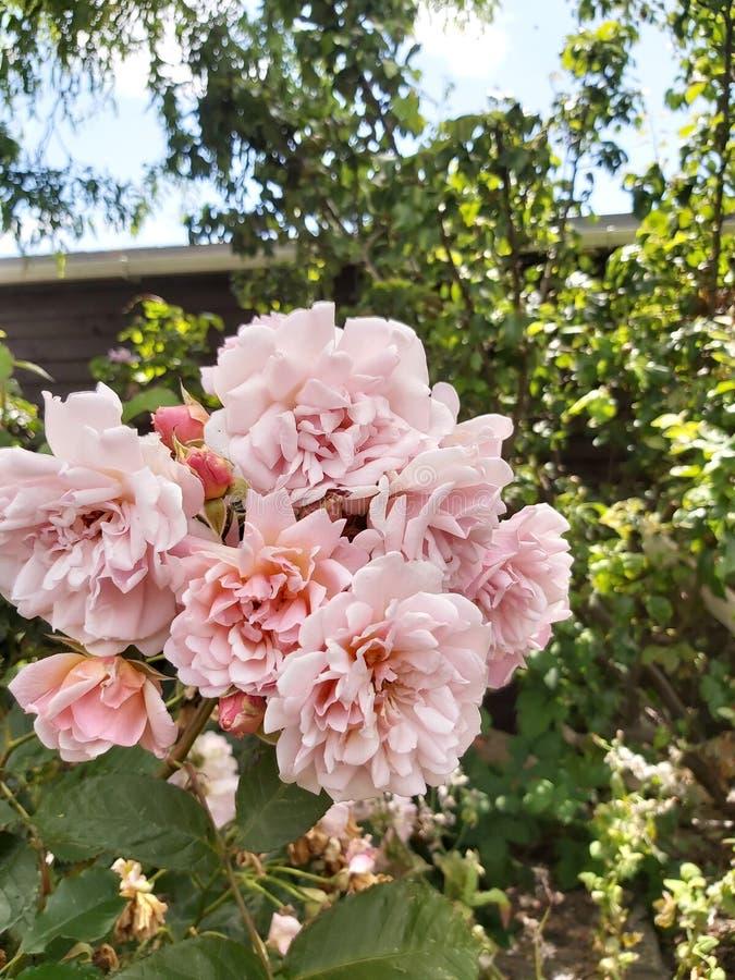 Η ομορφιά των λουλουδιών στοκ φωτογραφία με δικαίωμα ελεύθερης χρήσης