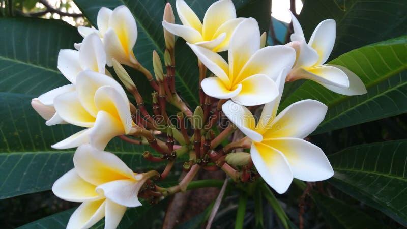 Η ομορφιά των λουλουδιών, προτείνει ότι υπάρχει ακόμα εμπιστοσύνη και ειλικρίνεια στοκ εικόνα