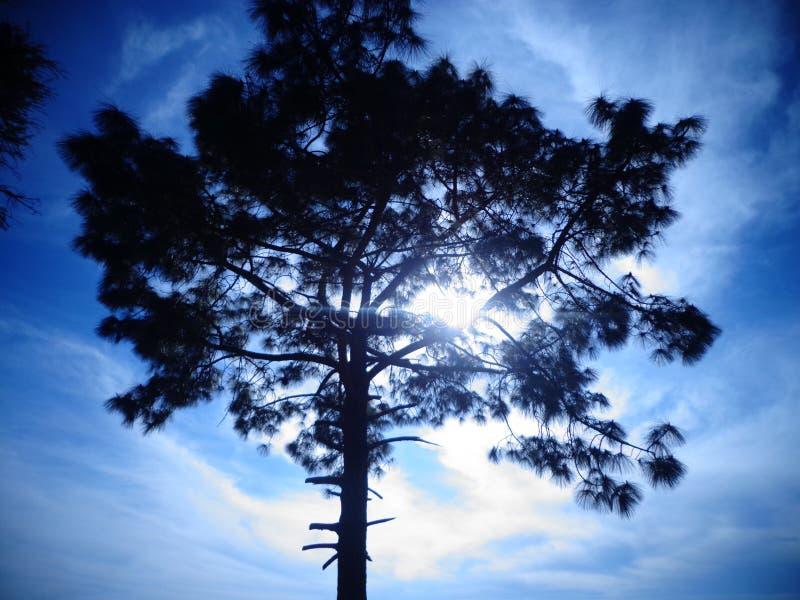 Η δορά παιχνιδιού ήλιων - και - επιδιώκει με τη φύση στοκ φωτογραφίες