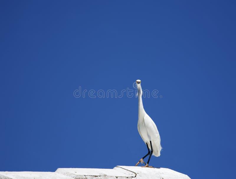 Η οριζόντια εικόνα χρώματος του άσπρου τσικνιά χιονιού κάθεται στη στέγη σε έναν μπλε ουρανό υποβάθρου στοκ φωτογραφία με δικαίωμα ελεύθερης χρήσης