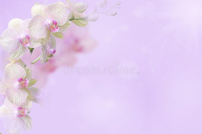 Η ορχιδέα αυτό είναι τονισμένο ροζ στοκ εικόνες