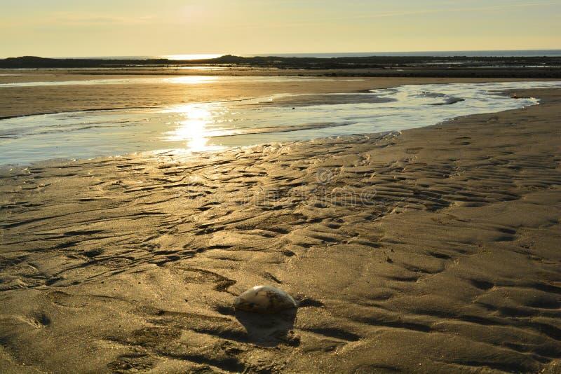 Η παραλία έχει μια όμορφη χρυσή άμμο στοκ φωτογραφία με δικαίωμα ελεύθερης χρήσης