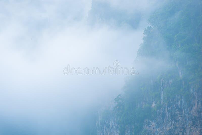 Η παχιά ομίχλη καλύπτει τα δάση βουνών στοκ εικόνα με δικαίωμα ελεύθερης χρήσης