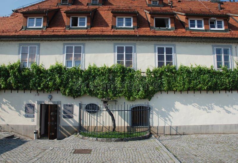 Η παλαιά άμπελος σε Maribor στοκ εικόνες με δικαίωμα ελεύθερης χρήσης