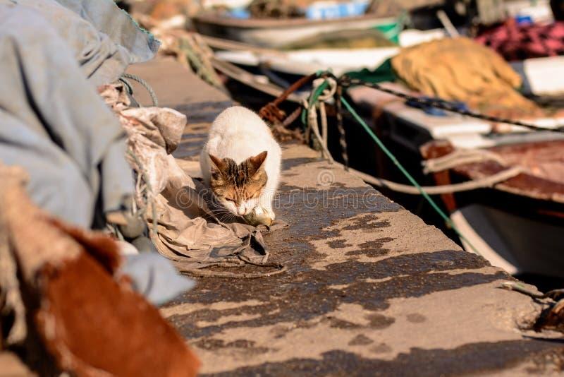 Η πεινασμένη περιπλανώμενη γάτα τρώει τα πιασμένα ψάρια θάλασσας στοκ φωτογραφία