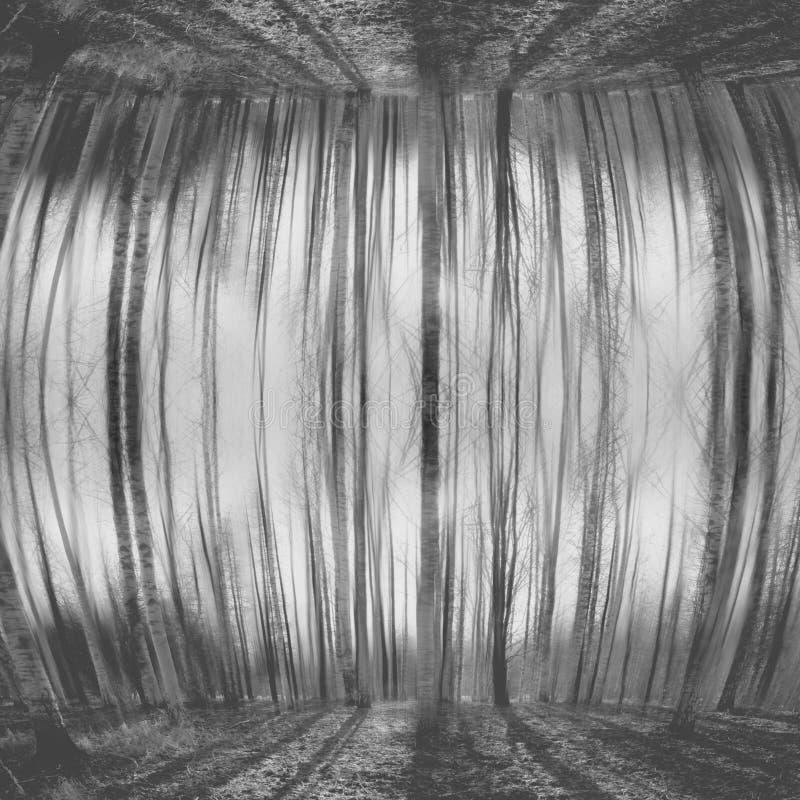 Η περίληψη θόλωσε το γκρίζο δάσος στοκ εικόνες
