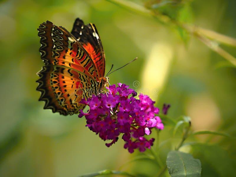 Η πεταλούδα κάθεται σιωπηλά στο λουλούδι - η πεταλούδα στο ΖΩΟΛΟΓΙΚΟ ΚΉΠΟ, κλείνει επάνω στοκ φωτογραφίες