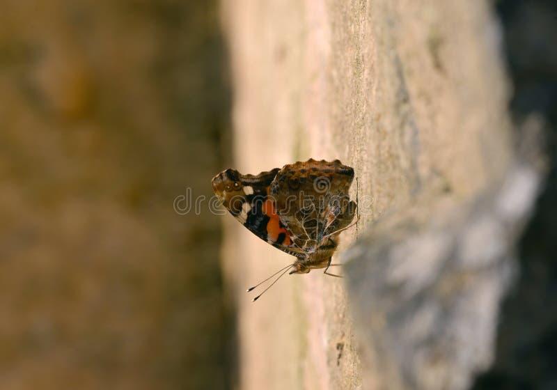 Η πεταλούδα στον απότομο βράχο στοκ εικόνες με δικαίωμα ελεύθερης χρήσης
