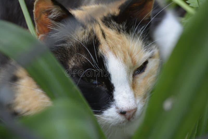 Η πολύχρωμη γάτα βρίσκεται ανάμεσα σε πράσινα φύλλα στοκ εικόνα με δικαίωμα ελεύθερης χρήσης