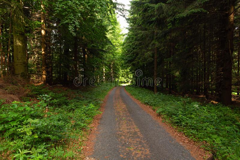 Η πορεία και το ηλιοβασίλεμα πεζοπορίας στα όμορφα ξύλα βλέπουν, εμπνευσμένο θερινό τοπίο στο δασικό μονοπάτι περπατήματος ή τη b στοκ φωτογραφία με δικαίωμα ελεύθερης χρήσης