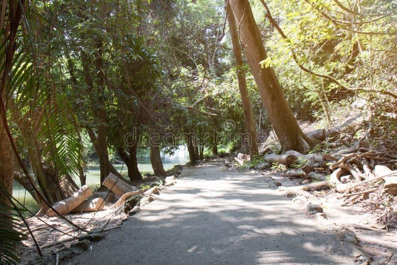 Η πορεία μέσω του δάσους και εμπρός στοκ εικόνα