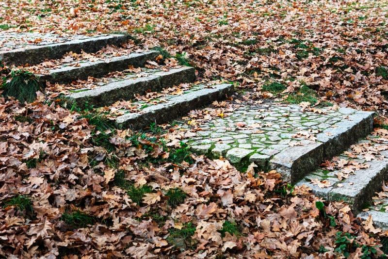 η πορεία σκαλοπατιών μέσω της πτώσης χρωμάτισε τα φύλλα στοκ εικόνες